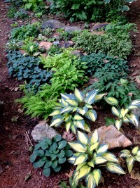 shade gardening   CAROLYN'S SHADE GARDENS