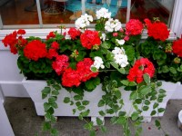 Window Box Ideas from Camden Maine