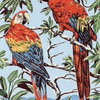 0028_papagájok (Lauren)
