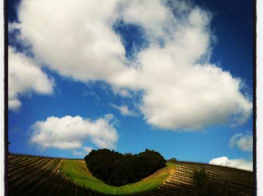 hearthill paso robles wine country