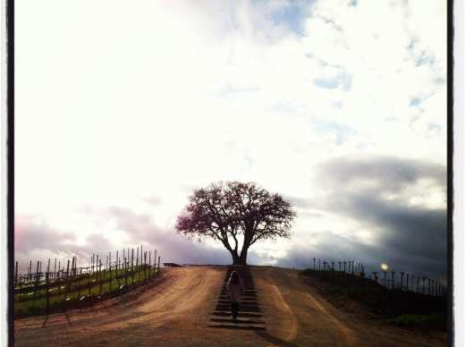 Sunset at Pear Valley in Paso Robles