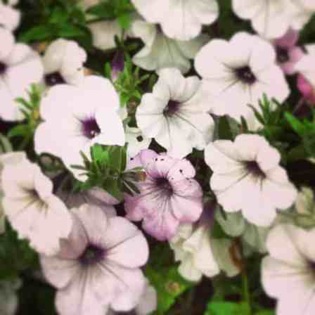 flowers in washington park denver