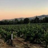 General vineyard view (1)