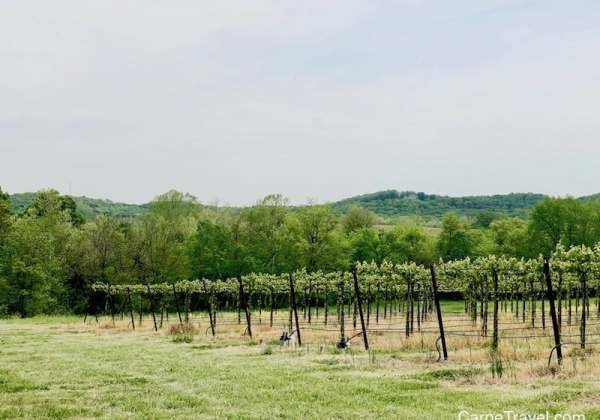 Missouri the first AVA wine region