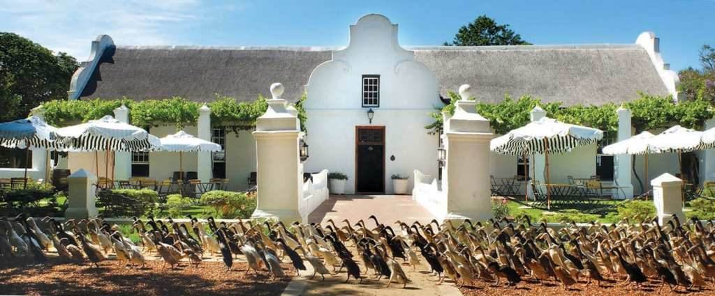 Vergenoegd Wine Estate - One of the Top 10 Must Sip Cape Town Wineries