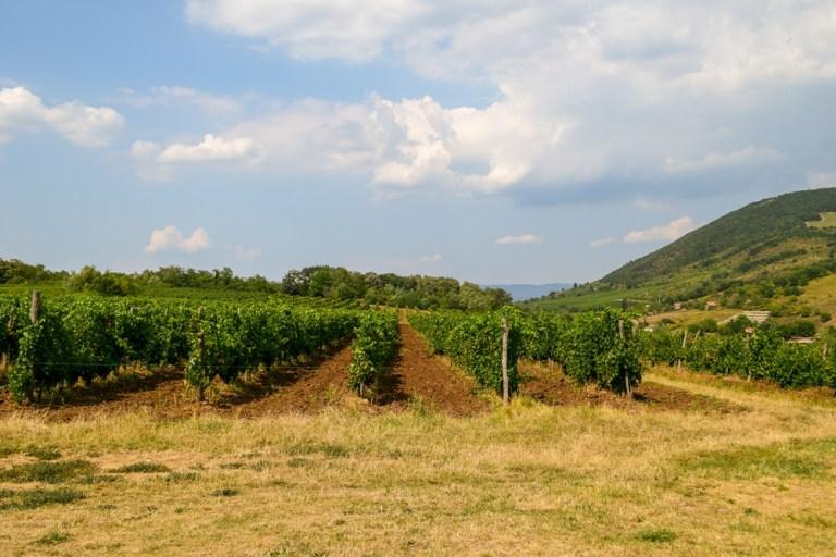 Vineyard Eger