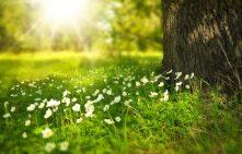 nature soleil arbre herbe