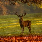 cerf forêt animal sacré chasseur bois