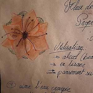 Zoom fleur de Nash