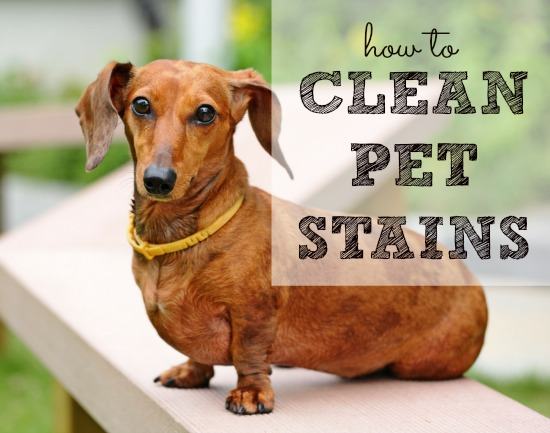 Best Way To Get Rid Of Dog Poop Smell