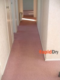 Commercial Carpet Cleaning in Tauranga | Stain Treatment ...