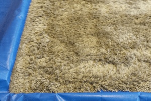 Submerge Rug Cleaning