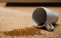 Stain and Odor Removal Northern VA | Carpet Cleaning ...