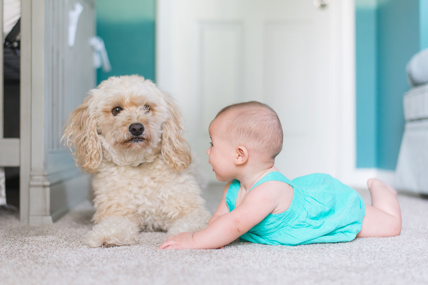 puppy and puppy on carpet