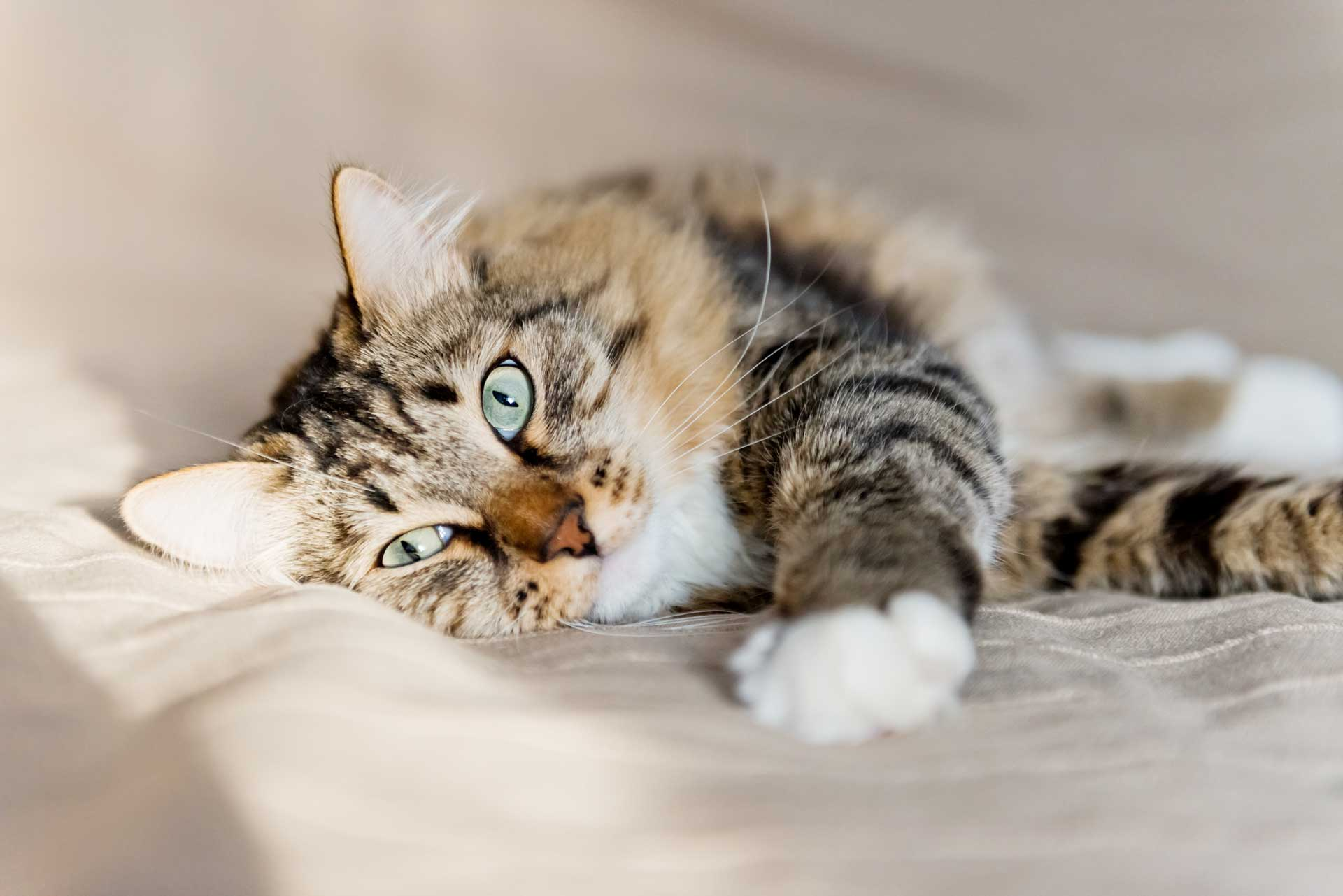 cat urine on sofa cushion palmer rope pet odor removal archives carpet keepers