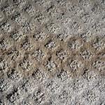carpet seams showing band
