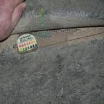 carpet seams showing urine at seam