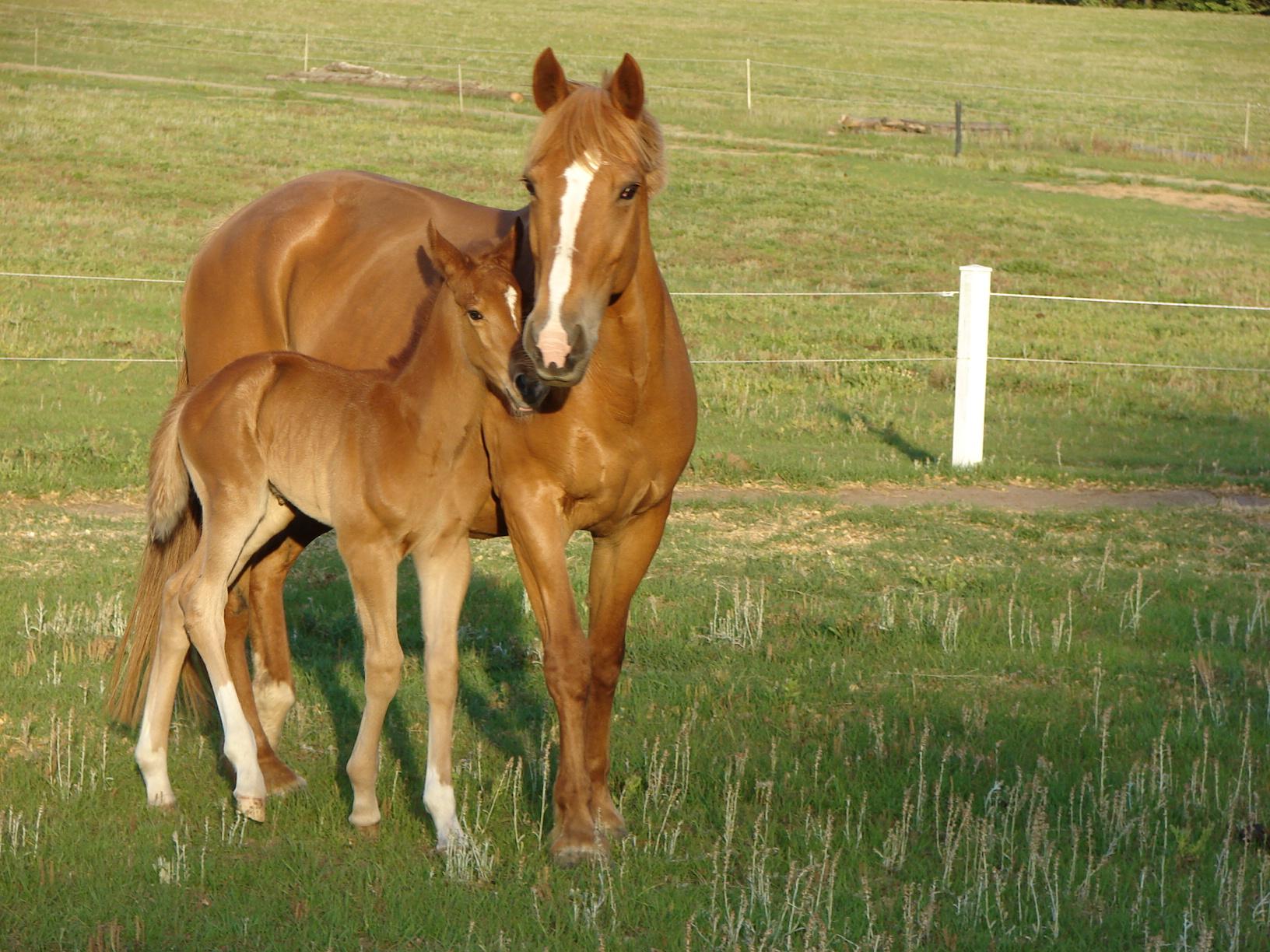 Breeding Mare Care Foal Delivery