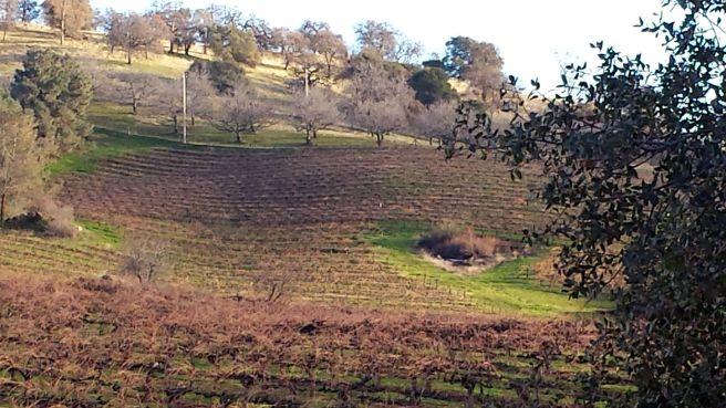 View from Shenandoah Valley Vineyard
