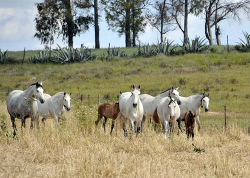 curious mares and nonchalant foals