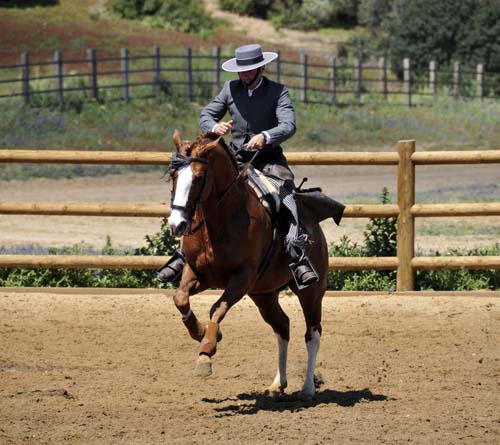 """the traditional """"ranch dressage"""" is vaguely similar to reining"""
