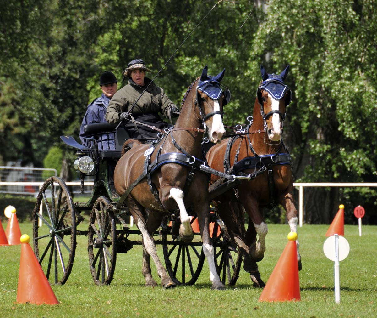 American driver Randy Cadwell on the cones course with her pair of horses