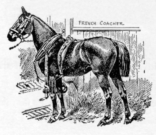 Harness Parts Diagram Draft Horse Harness Parts Diagram Horse Harness
