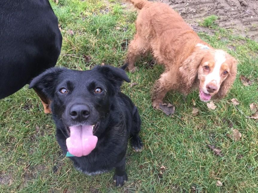 Carrie Bates dog training