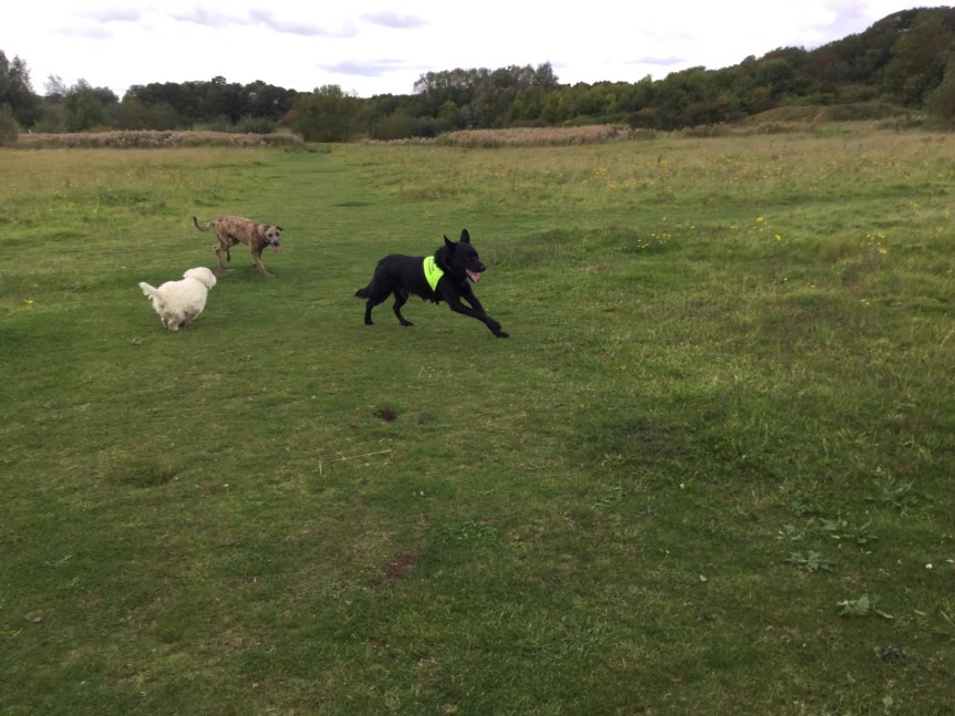 Dog training Cambridgeshire