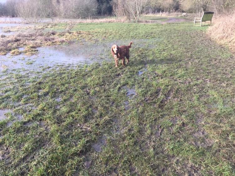 Puppy and dog training classes Huntingdon