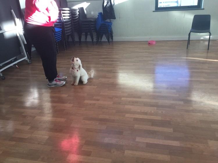 Training focus in dogs