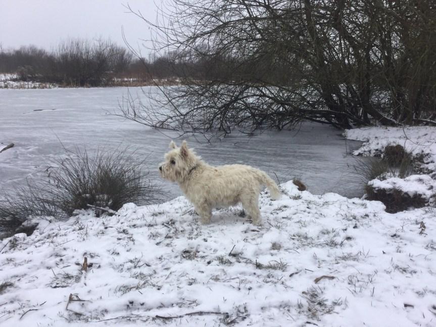 Dog training Cambridgeshire