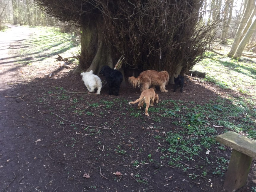 Dog group walks Huntingdon