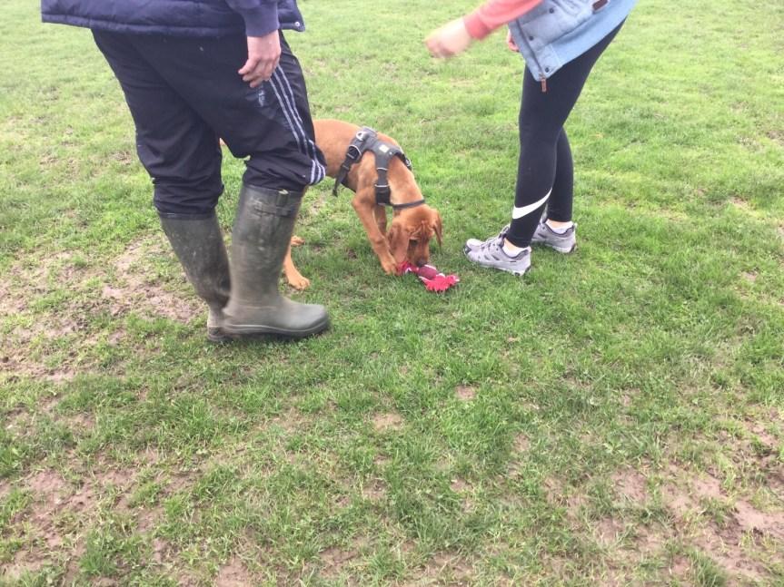 Puppy training Huntingdon