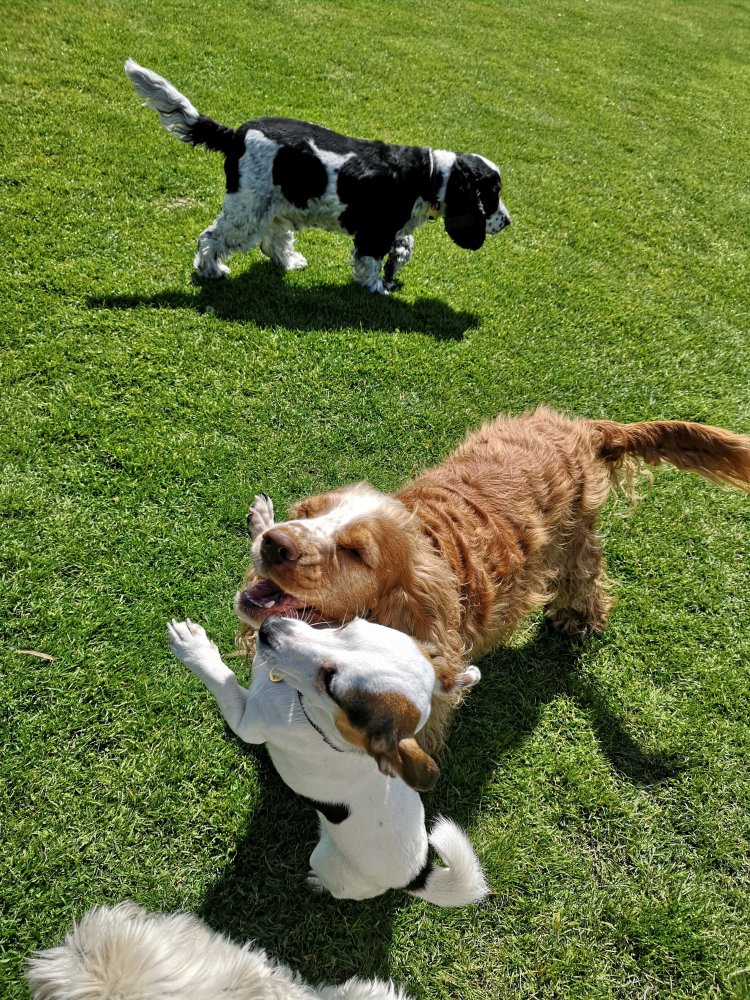 Dog training in Cambridgeshire