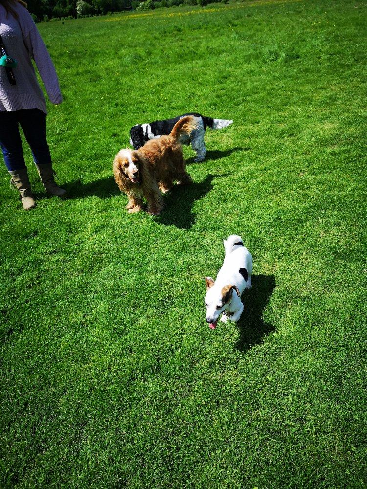 Dog training in Huntingdon