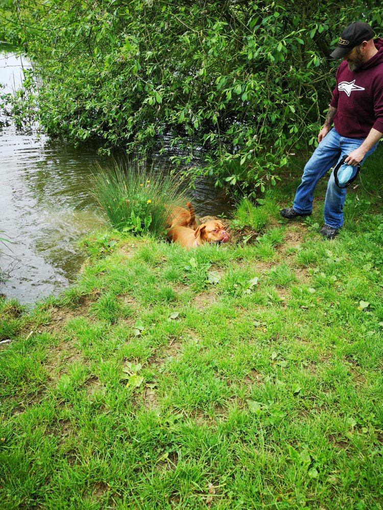 Dog training classes Huntingdon