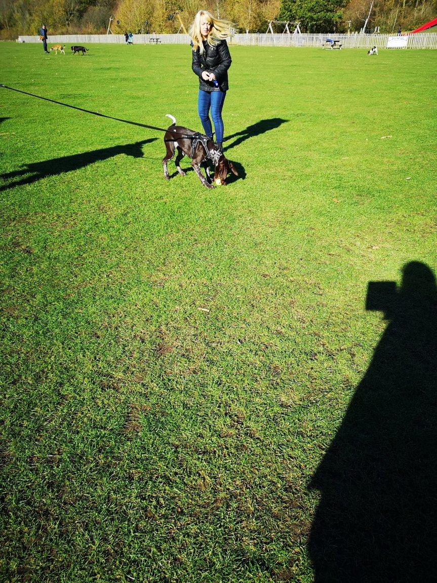 Advanced dog training classes Huntingdon