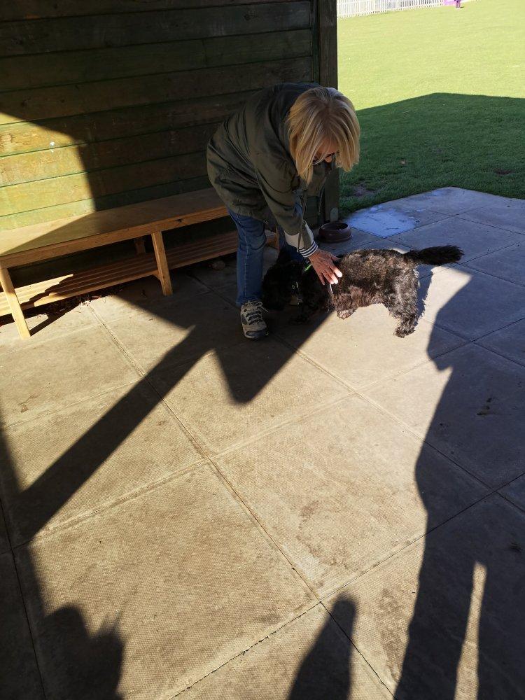 Rolling dog training classes Cambridgeshire