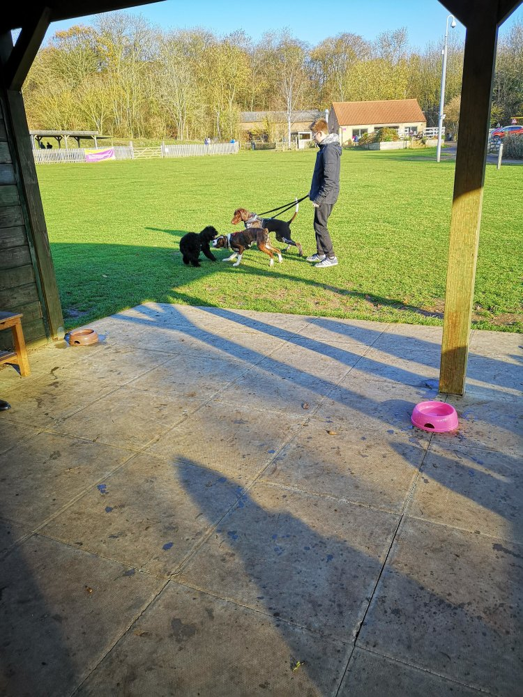 Advanced dog training classes Huntingdon