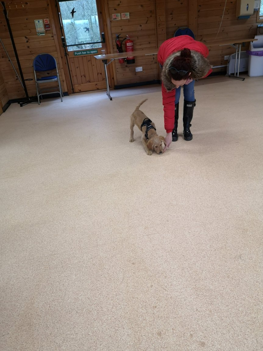 Puppy classes Cambridgeshire