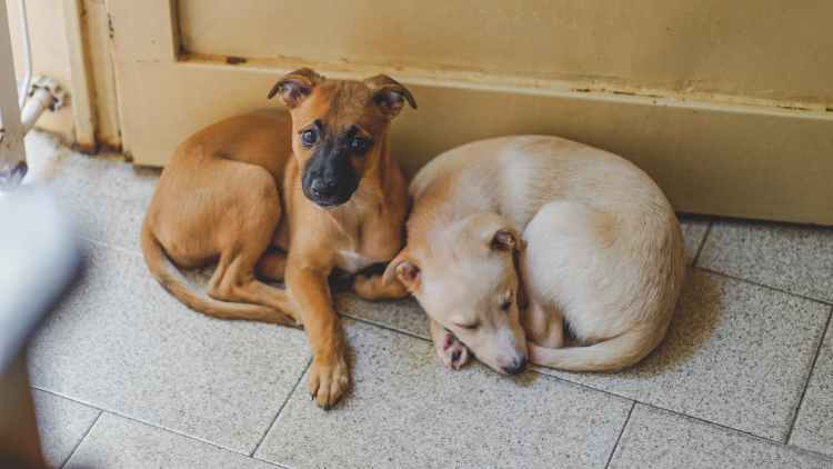 adorable dogs resting on tiled floor in house