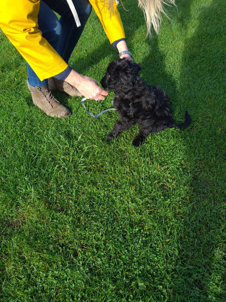 Puppy training classes Cambridgeshire