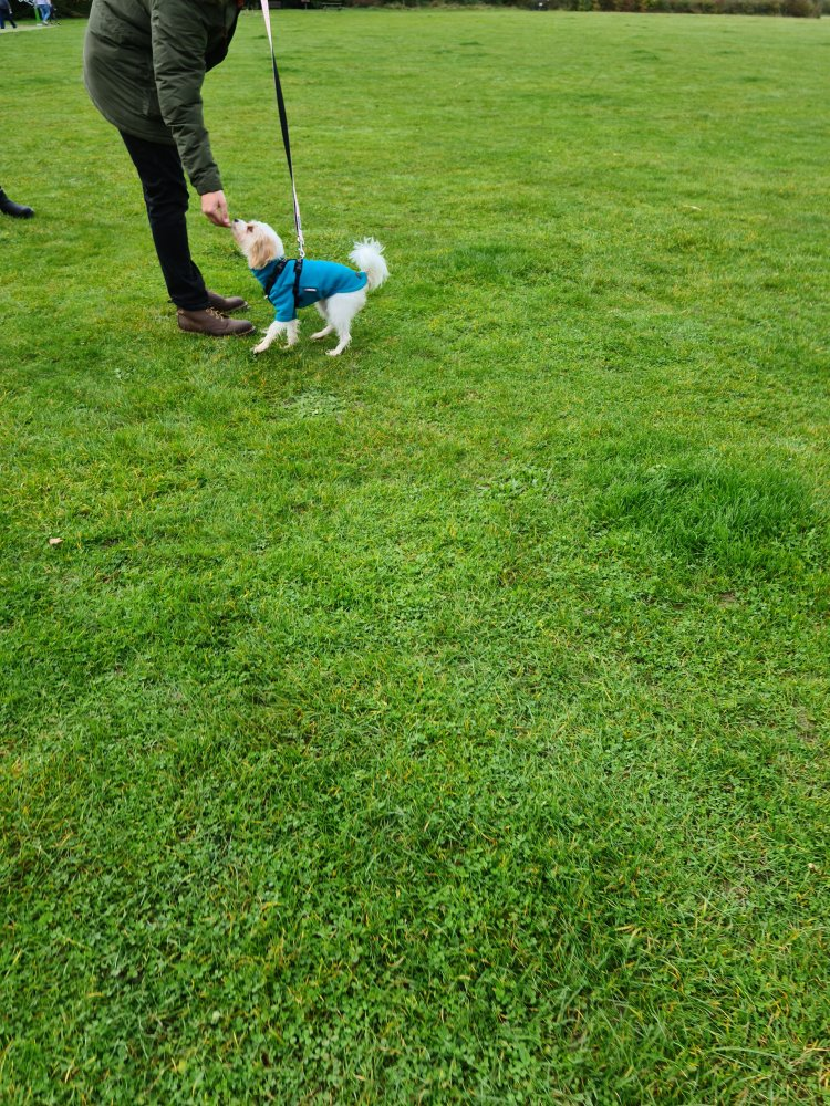 Puppy training Cambridgeshire