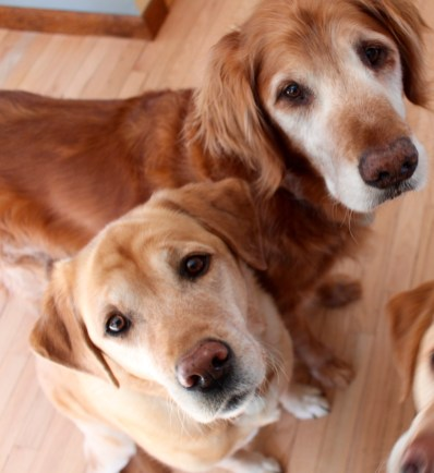 https://carriejonesbooks.blog/dogs-are-smarter-than-people-the-podcast/