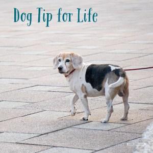 Dog Tip for Life