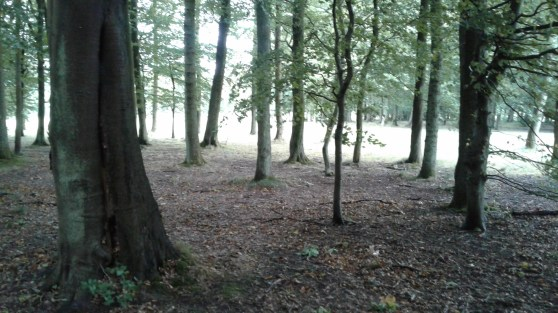 glade view, site of Outlander ep206 duel?, Pollok Country Park, Glasgow