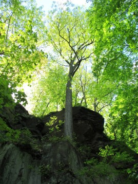 IMG_1634_lone-tree-outcrop-backlit