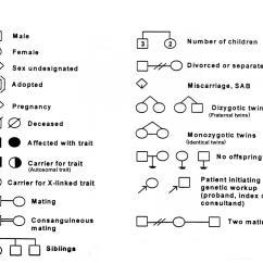 Heredity Family Tree Diagram Truck Damage Genetics How To Draw A Pedigree Youtube