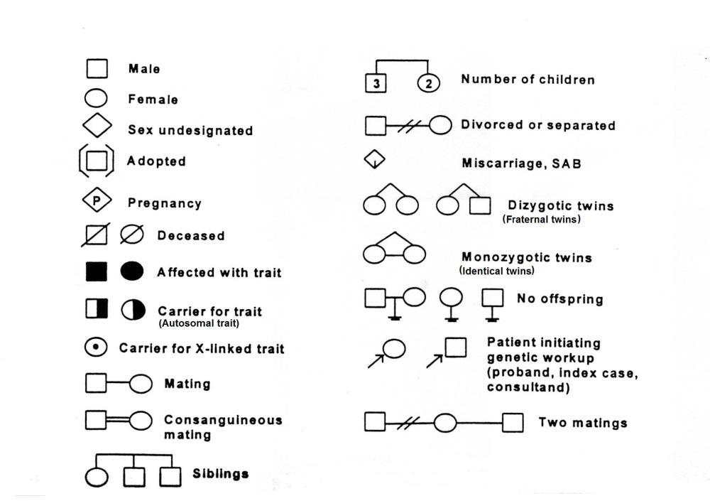 medium resolution of pedigree symbols pedigree chart explanation